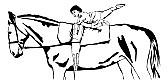 Volti Pferd